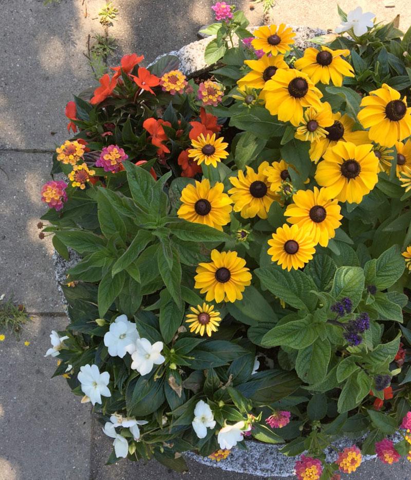 Kleingarten Mitte-Ost Flowerpower